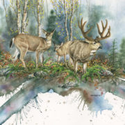 blacktails-web-6-944x5-458-72dpi-002